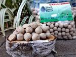 10 KG Garlic 2 Fish Boilies Preserved
